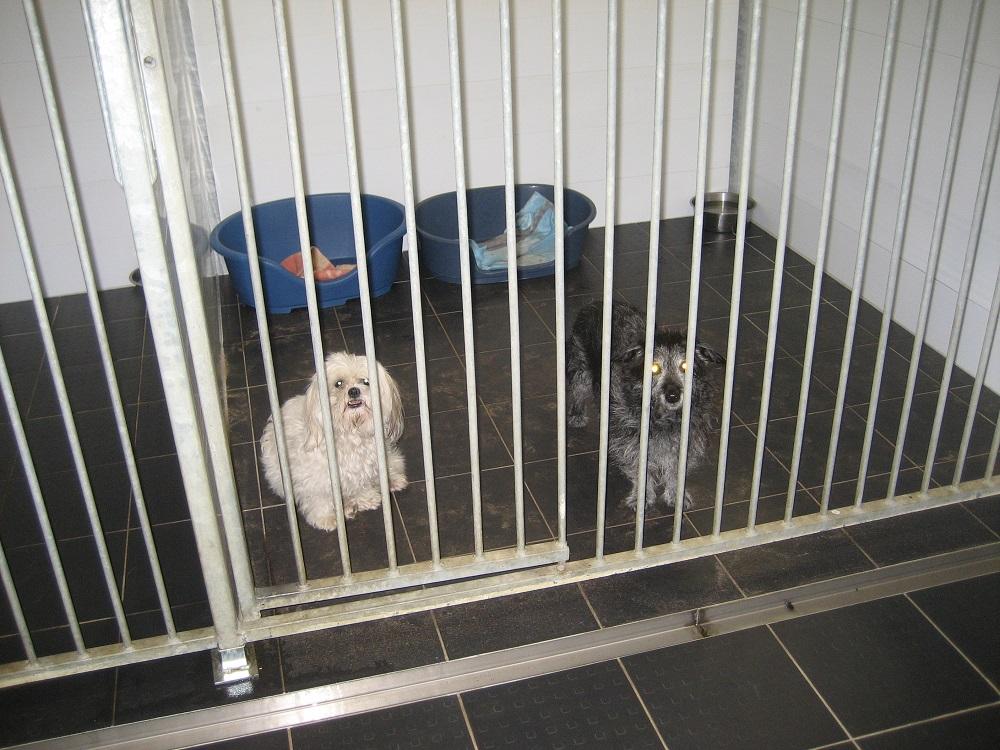 honden pension twente